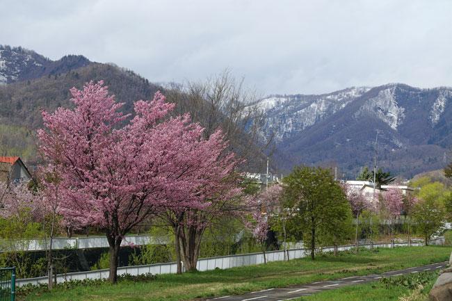 桜・・・3_d0162994_9114713.jpg