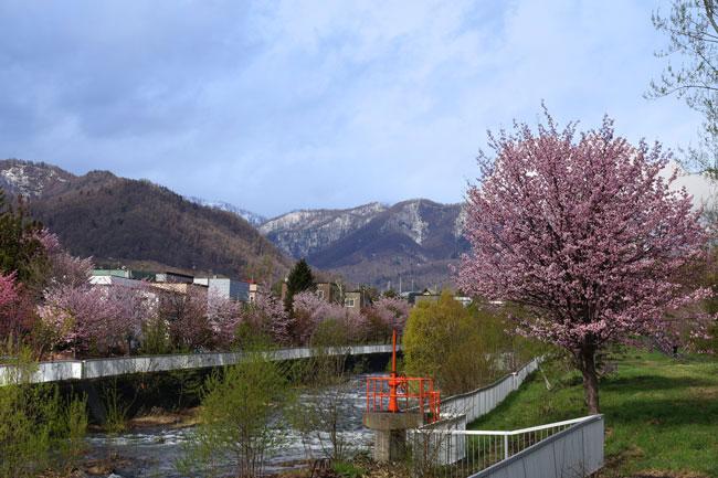 桜・・・3_d0162994_923972.jpg