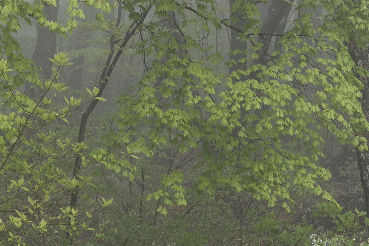 雨の日_b0074098_2204346.jpg
