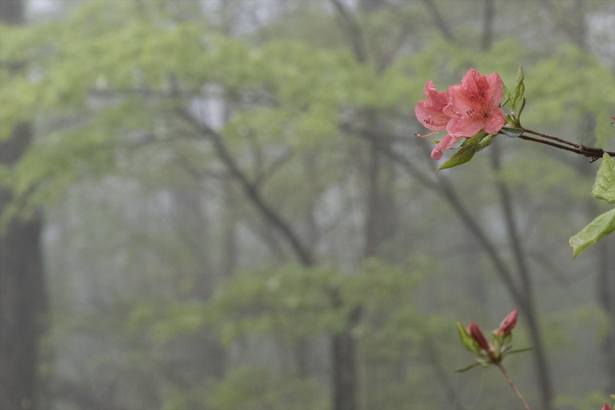 雨の日_b0074098_221526.jpg