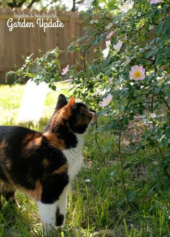 裏庭の花壇の様子(4月下旬~5月上旬)_b0253205_03073446.jpg