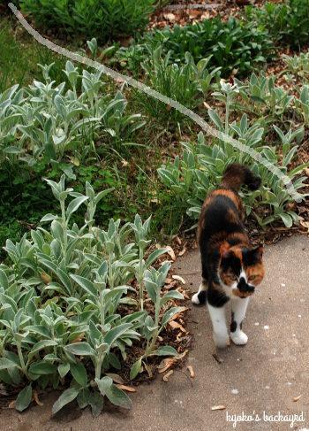 裏庭の花壇の様子(4月下旬~5月上旬)_b0253205_03084766.jpg