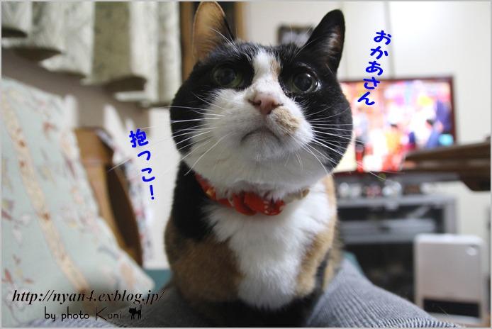 f0166234_051249.jpg