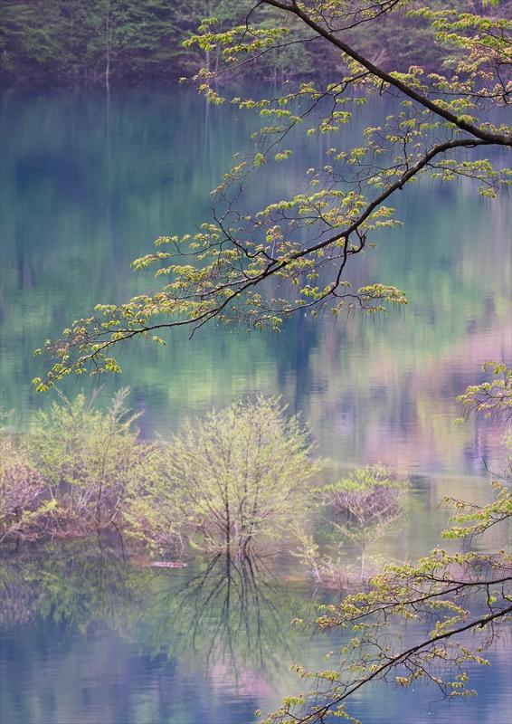 奥四万湖 3_f0018464_18595747.jpg