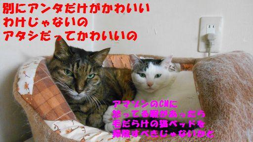 e0142430_15391326.jpg