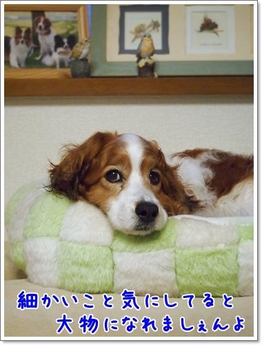d0013149_00113079.jpg