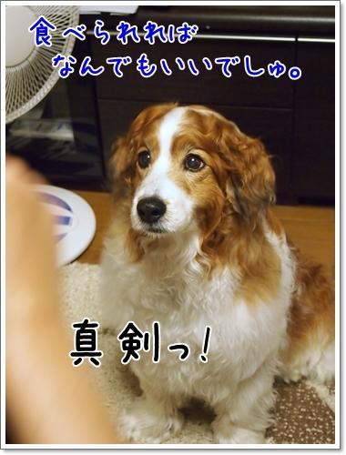 d0013149_22400205.jpg