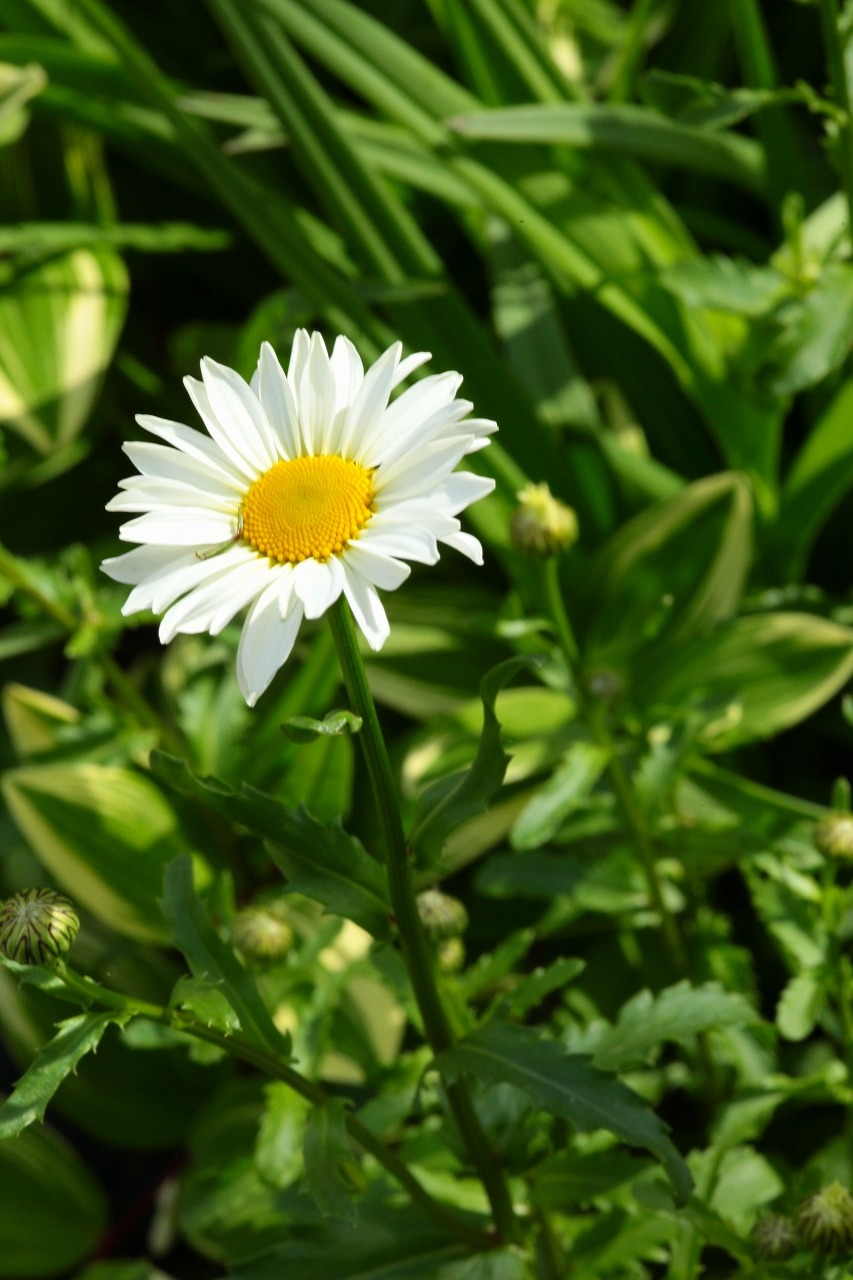 \'16 Spring              Vol.2_b0333959_08440961.jpg