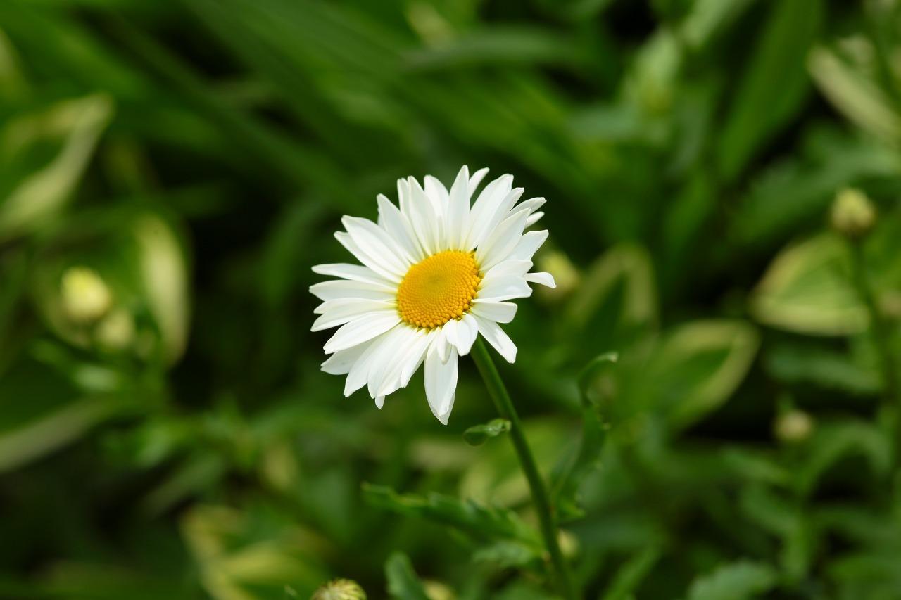 \'16 Spring              Vol.2_b0333959_08452947.jpg