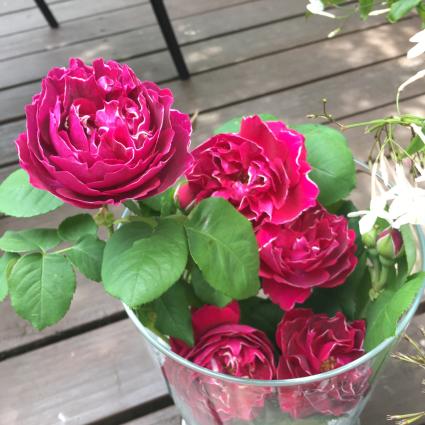 薔薇がいっぱい_a0163160_11553427.jpg