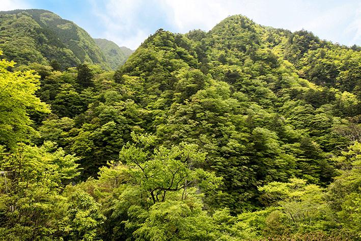 母なる木のみどりに感謝しましょう 徳島県高の瀬峡と高知県べふ峡です_f0231460_17471721.jpg