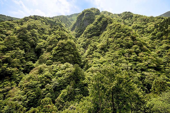 母なる木のみどりに感謝しましょう 徳島県高の瀬峡と高知県べふ峡です_f0231460_17481858.jpg