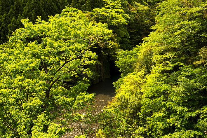 母なる木のみどりに感謝しましょう 徳島県高の瀬峡と高知県べふ峡です_f0231460_1749132.jpg