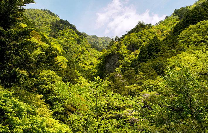 母なる木のみどりに感謝しましょう 徳島県高の瀬峡と高知県べふ峡です_f0231460_17495382.jpg
