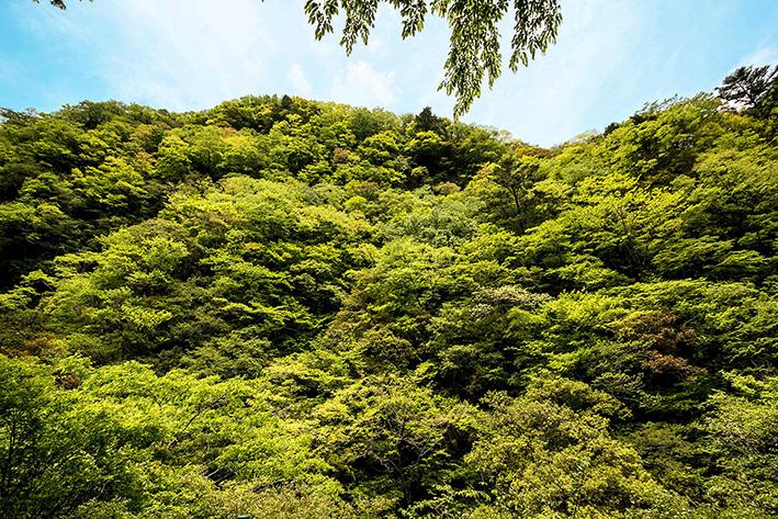 母なる木のみどりに感謝しましょう 徳島県高の瀬峡と高知県べふ峡です_f0231460_17503655.jpg