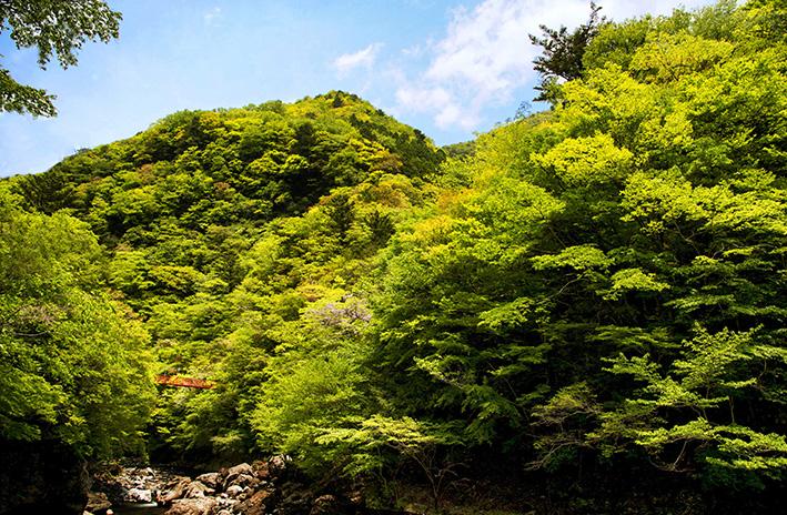 母なる木のみどりに感謝しましょう 徳島県高の瀬峡と高知県べふ峡です_f0231460_17511023.jpg