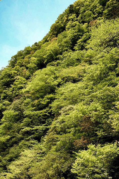 母なる木のみどりに感謝しましょう 徳島県高の瀬峡と高知県べふ峡です_f0231460_17531166.jpg