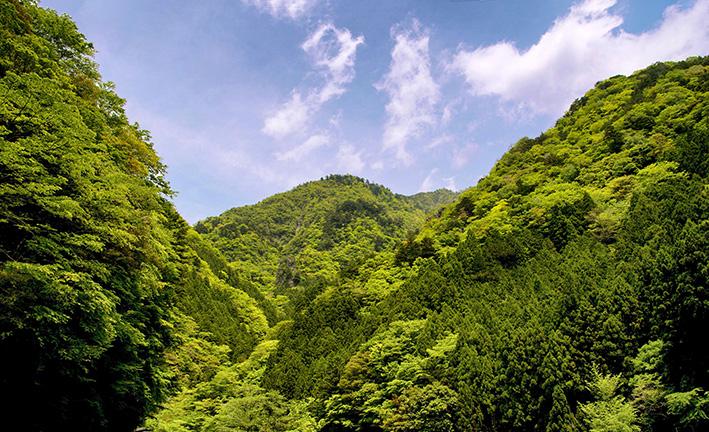 母なる木のみどりに感謝しましょう 徳島県高の瀬峡と高知県べふ峡です_f0231460_17534894.jpg