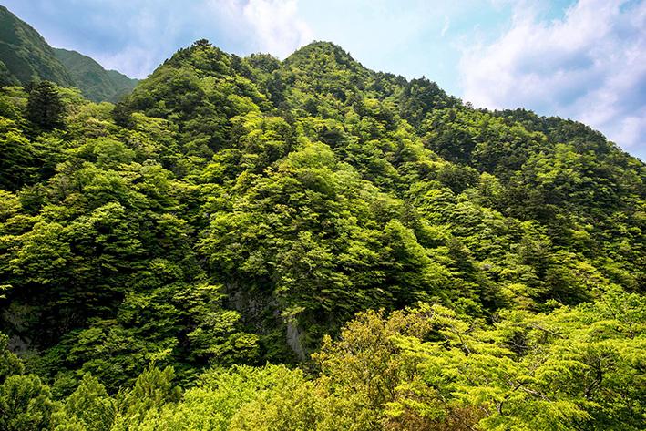 母なる木のみどりに感謝しましょう 徳島県高の瀬峡と高知県べふ峡です_f0231460_1873459.jpg