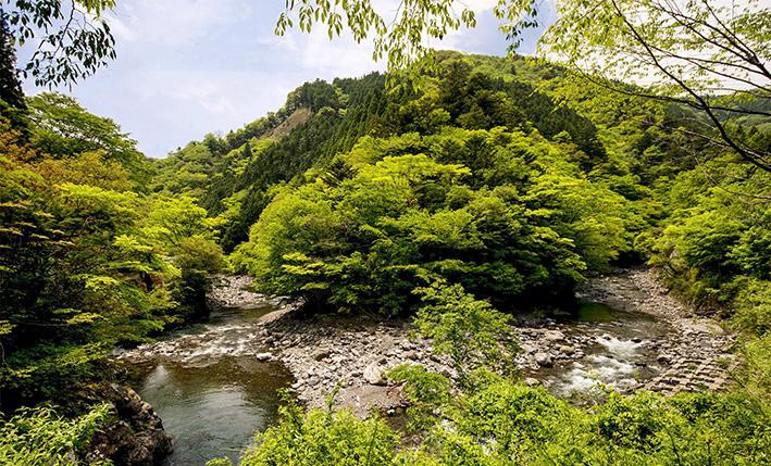 母なる木のみどりに感謝しましょう 徳島県高の瀬峡と高知県べふ峡です_f0231460_1885881.jpg