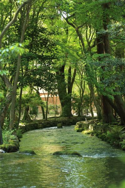 上賀茂神社_e0051888_348328.jpg