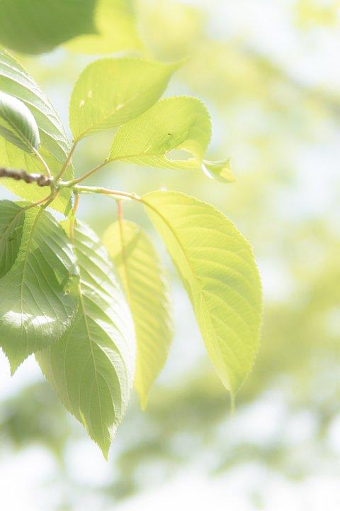 なんとか間に合った新緑の季節_d0353489_1991644.jpg