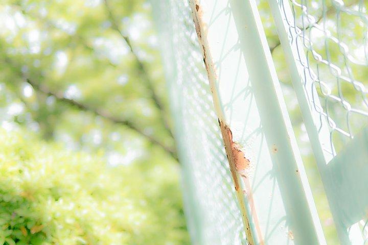 なんとか間に合った新緑の季節_d0353489_1993282.jpg