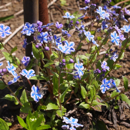 春のお庭散策_a0292194_20291461.jpg
