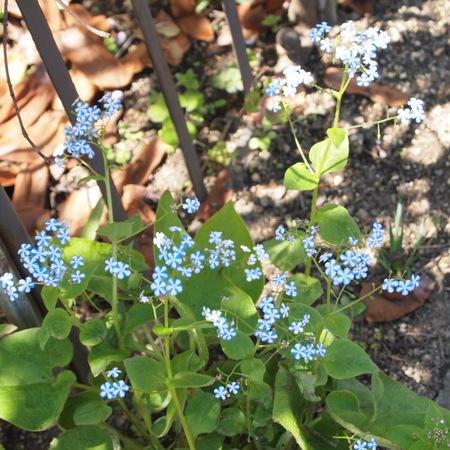 春のお庭散策_a0292194_20315523.jpg