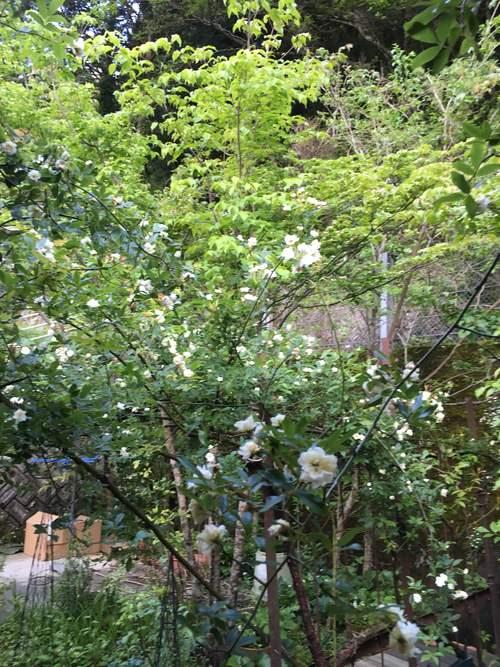 白い庭_d0087595_7244027.jpg