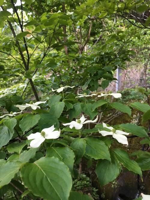 白い庭_d0087595_7245434.jpg