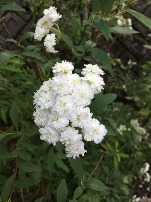 白い庭_d0087595_7251914.jpg