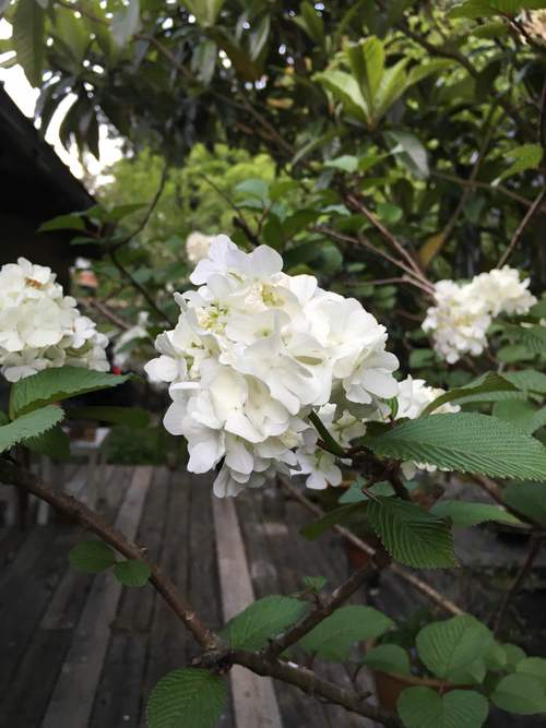 白い庭_d0087595_7253146.jpg