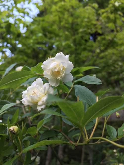白い庭_d0087595_725584.jpg