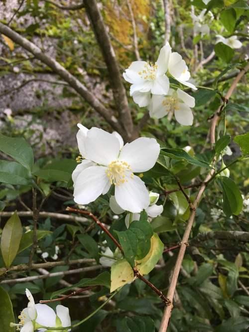 白い庭_d0087595_725717.jpg