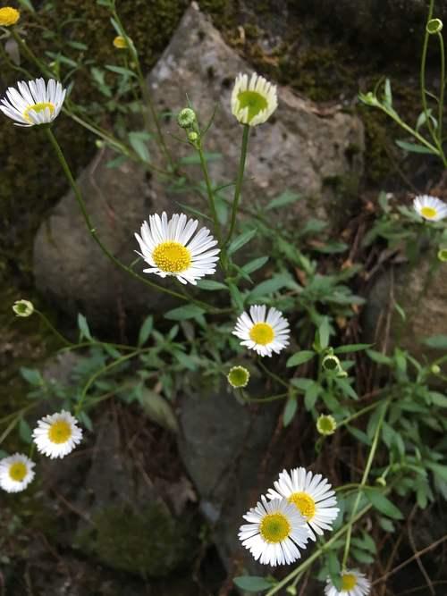 白い庭_d0087595_726989.jpg