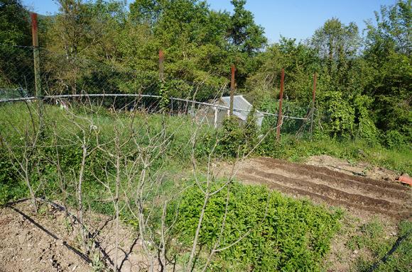 雨の前に大急ぎでインゲン豆を蒔きました_f0106597_04433932.jpg