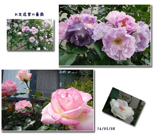 散歩、新選組祭り、薔薇友さん _c0051105_227331.jpg