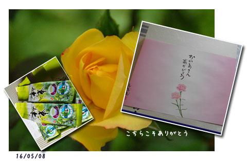 散歩、新選組祭り、薔薇友さん _c0051105_2295655.jpg