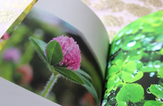 フォトブックを作って遊ぶ3☆花園_a0329820_14512612.jpg