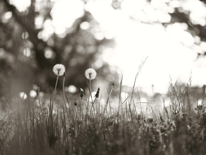 春の終わり_e0169421_21503851.jpg
