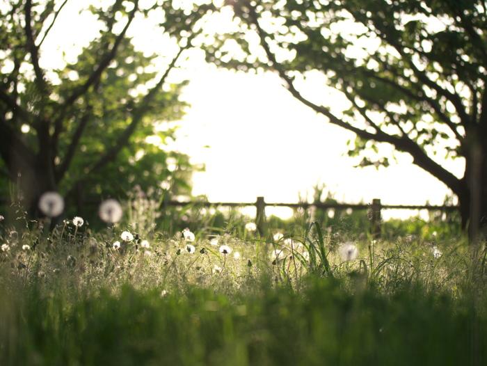 春の終わり_e0169421_21504055.jpg