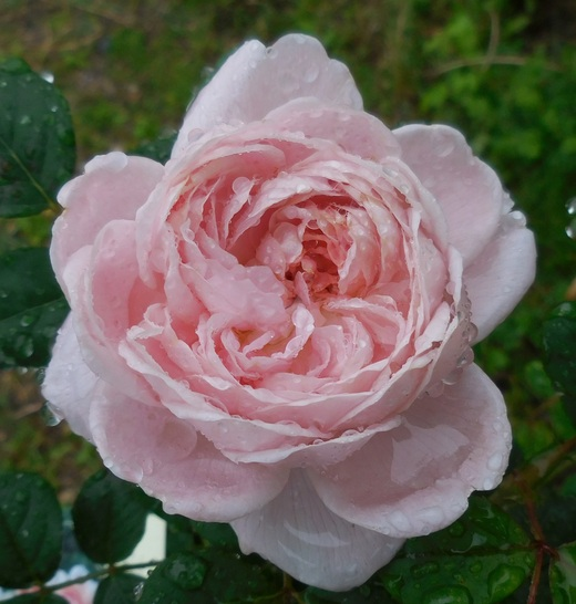 お花を見てバラを選ぶベストシーズンです!_f0139333_163471.jpg