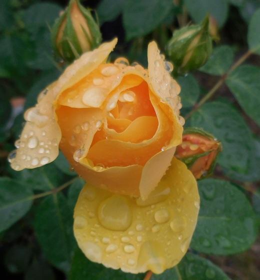 お花を見てバラを選ぶベストシーズンです!_f0139333_1641626.jpg