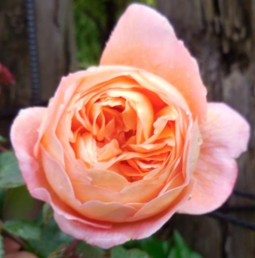 お花を見てバラを選ぶベストシーズンです!_f0139333_1652155.jpg