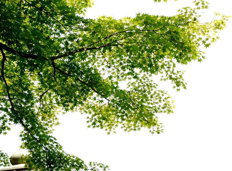 紅葉渓庭園にて_b0093754_1726179.jpg