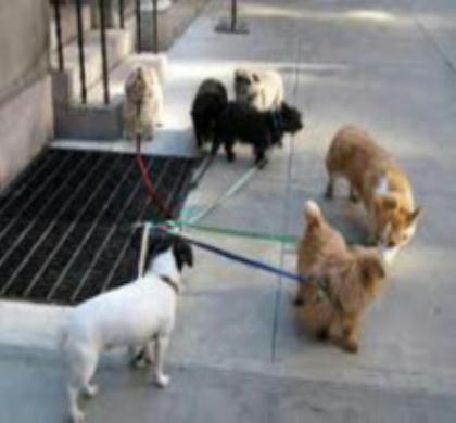 犬も歩けば・・・_c0328479_1243253.jpg