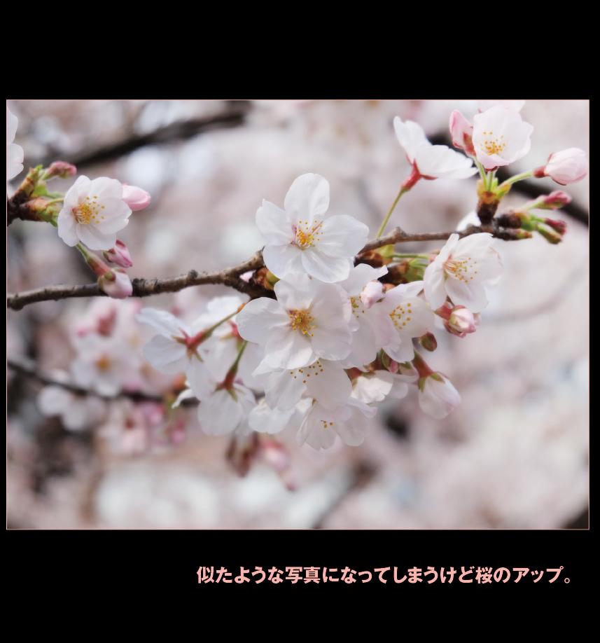 a0358016_10254352.jpg