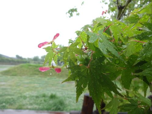 b0069630_20112932.jpg