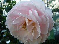 5月〜薔薇によせて〜_d0337937_07491609.jpg